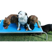 Virtually Indestructible Dog Trampoline Bed Small